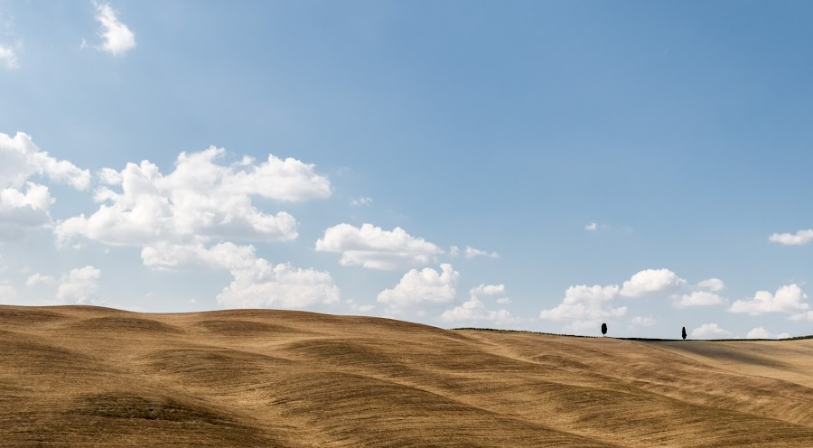Val D'Orcia  by Pietro Ebner - Landscapes Prairies, Meadows & Fields ( orcia, val, tuscany, toscana, yellow, country,  )