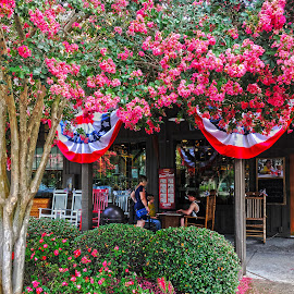 Independence Day in Pooler Georgia by Dee Haun - Public Holidays July 4th ( 2017, holiday, red white and blue, 170521t0831ce3h, patriotic, pink, street scene, iphone, crepe myrtle, independence day, july 4 )