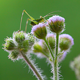 by Carmina Quesada - Nature Up Close Other plants ( wildflower, green, wildlife, insect, natural,  )
