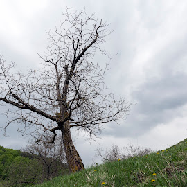 Alone tree by Carla Coanda - Nature Up Close Trees & Bushes ( nature, tree, loneliness, solitude, landscape, universe, outside,  )