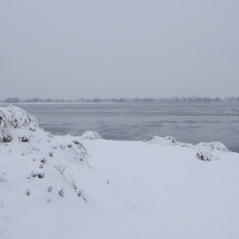 Snowy Waterscape by Kristine Nicholas - Novices Only Landscapes ( water, dunes, snowstorm, waterscape, dune, plants, snowy, sea, ocean, atlantic, landscape, winter, snow, gulf, weather, blizzard, wet )