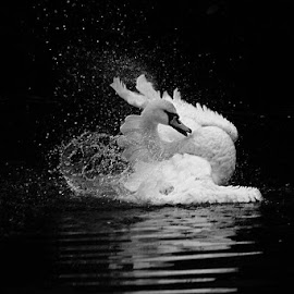 by Tracy Taylor - Black & White Animals