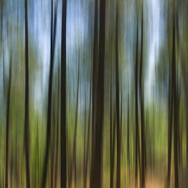 Forest Through the Trees by Christopher Pischel - Landscapes Forests ( abstract, panning, trees, forest, panorama )