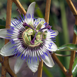nice summer flower by LADOCKi Elvira - Flowers Single Flower ( wind, nature, plants, sunshine, flowers, garden, floral )