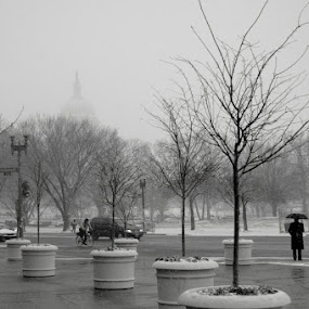 Wintery day in Washington by Rob Donner - Landscapes Travel ( dc, washington, winter, rotunda, capitol )
