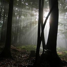 by Siniša Almaši - Nature Up Close Trees & Bushes ( view, sunrays, sunlight, depth, nature, light, natural light, tree, trees, colors, morning )