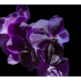 Purple Flower by Steven Greenbaum - Nature Up Close Flowers - 2011-2013