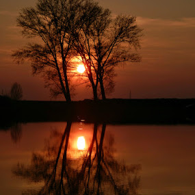 Trees trio in the golden hour.. by Željko Salai - Nature Up Close Trees & Bushes