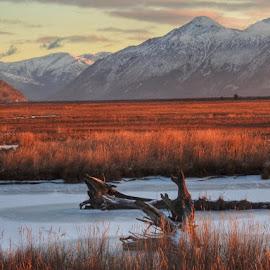 Potter Marsh by Patricia Phillips - Landscapes Travel ( marshes alaska potter november )