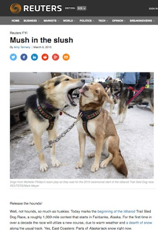 the Iditarod for Reuters