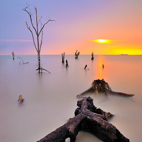 after life by Azri Suratmin - Landscapes Sunsets & Sunrises ( pantai klanang, wood, sunset, azri, pink, malaysia, seascape, azrisuratmin )