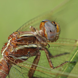 by Jan Jordaan - Animals Insects & Spiders