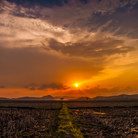 Towards....  by Devendra Hijam - Landscapes Sunsets & Sunrises ( clouds, field, sunset, lines, evening,  )
