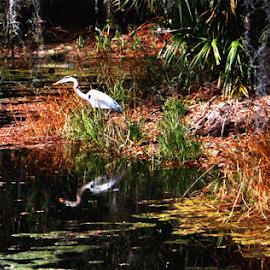 Bird Reflection by Edward Gold - Digital Art Animals ( digital photography, green grass, bird reflection, white bird, artistic, water, brown grass, scenic view, digital art,  )
