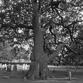 Tree in Graveyard B&W by Kristine Nicholas - Novices Only Landscapes ( nature, tree, graves, black and white, cemetary, bw, trees, grave, historic, iphone 6s photos )