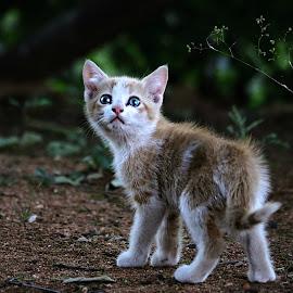Exploring by Pieter J de Villiers - Animals - Cats Kittens