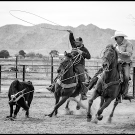 Roping by Dave Lipchen - Black & White Sports ( roping )