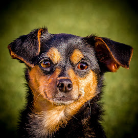 by Terry Watson - Animals - Dogs Portraits ( eastlake dog orphanage, dogs, elpo 7-20-16 )