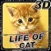 Life of Cat