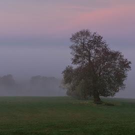 The lone tree by Mike Forster - Landscapes Prairies, Meadows & Fields ( utazás, reggel, uk, hidcote park, fog, fall, travel, őssz, morning )