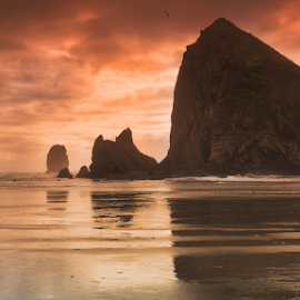 Cannon Beach, OR by Andy Taber - Landscapes Beaches (  )