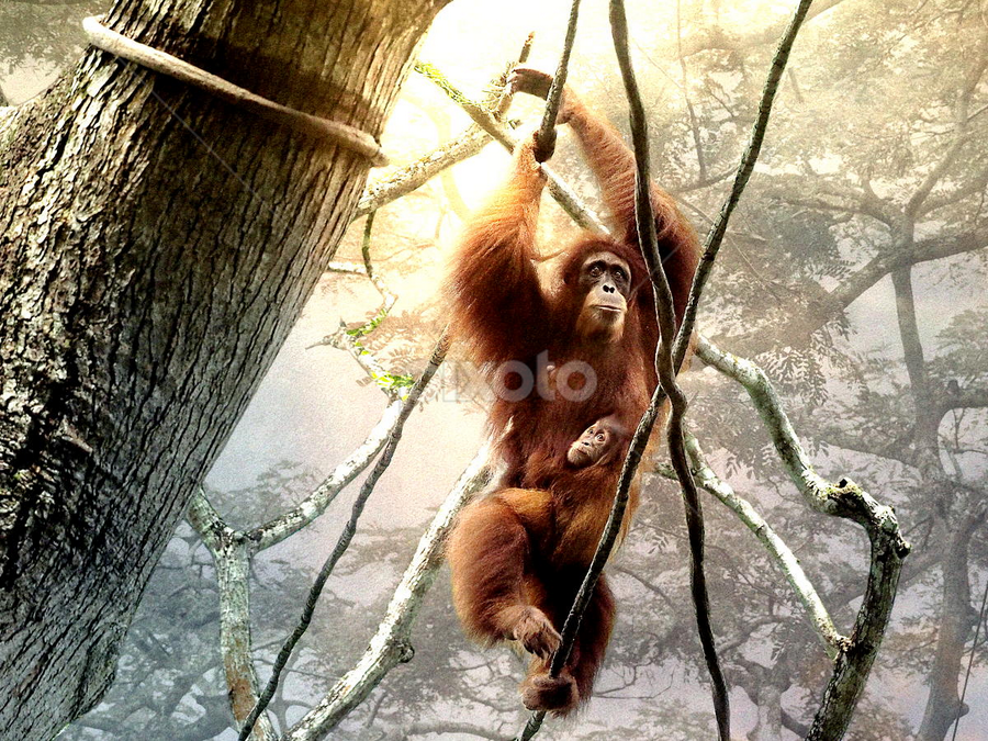 Into the Jungle by Bjørn Borge-Lunde - Digital Art Animals ( wild animal, animals, wilderness, nature, big apes, monkeys, ape, orangutan )