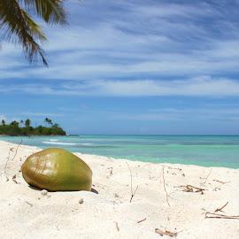 Dominican Republic by Emma Thompson - Landscapes Beaches ( coconut, ocean, beach, paradise, caribbean, island )