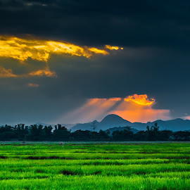 Tri-color by Ynon Francisco - Landscapes Prairies, Meadows & Fields ( clouds, farm, rice, colors, agriculture, sunrays )