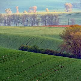 Morning Mood by Jaro Miščevič - Landscapes Mountains & Hills ( trees, morning, landscape, light, colours, fields )