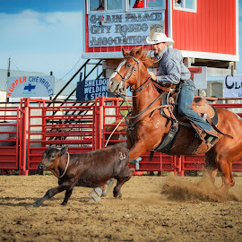 by Alex Rosenkranz - Sports & Fitness Rodeo/Bull Riding (  )
