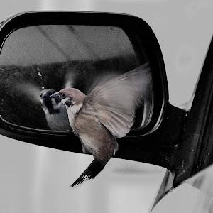 burungku1.jpg