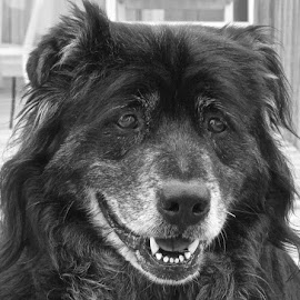 Pablo, Old Soul by Kim De Quintal - Animals - Dogs Portraits