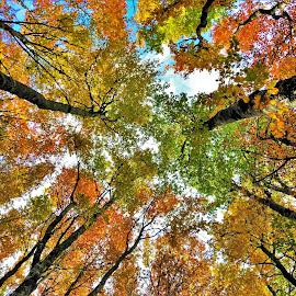 by Martina Brnić - Nature Up Close Trees & Bushes