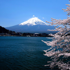 the icons of Japan by Fred Goldstein - Landscapes Mountains & Hills ( icon, cherry, japan, mountain, tree, fuji, lake )