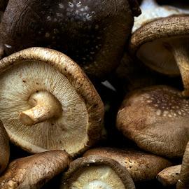 Mushrooms by Mark Ritter - Food & Drink Fruits & Vegetables ( macro, fungus, closeup, mushroom )