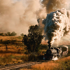 Whipping Up Steam by Anne D'Oliveira - Transportation Trains