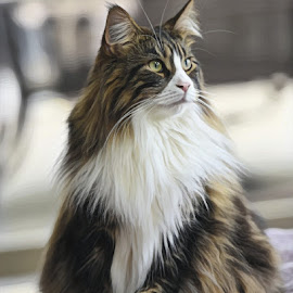 by Mark Luftig - Animals - Cats Portraits