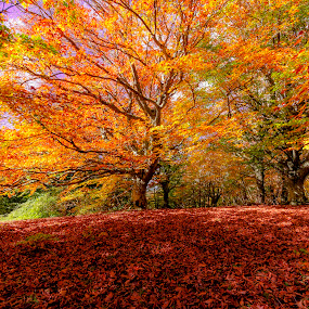 Autumn by Mauro Fini - Landscapes Forests ( canfaito, monta san vicino )