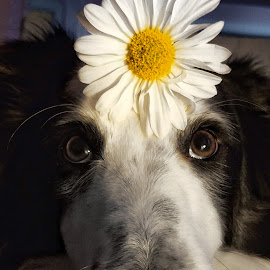 by Diana Byes - Animals - Dogs Portraits
