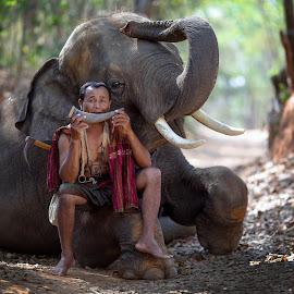 elephant babysitter in forest by Pitakchatr Thepracha - People Portraits of Men ( babysitter, wood, african, serengeti, elephant, cornfield, thailand, wildlife, travel, tanzania, landscape, sun, trainer, asian, village, tree, nature, family, lifestyle, asia, plain, africa, evening, light, cambodia, animal, wild, orange, park, national, beautiful, world elephant day, forest, heavy, rough, mammal, field, red, environment, savanna, meadow, summer, view, training course, sunrise, scenery, day, teacher, natural, world )