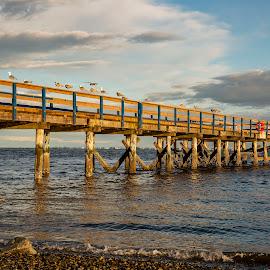 by P Murphy - Buildings & Architecture Bridges & Suspended Structures