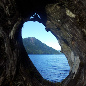 by Kaitlyn Smith - Landscapes Waterscapes ( washington, mountain, lake crescent, tree, lake )