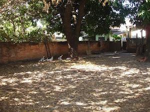 Terreno residencial à venda, Setor Campinas, Goiânia - TE0268. - Setor Campinas+venda+Goiás+Goiânia