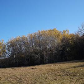 Есен by Georgi Kolev - Novices Only Landscapes ( небе., слънце., ливада., есен., дървета. )
