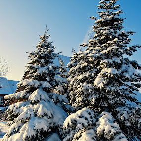 Magical winter by Delia Galhotra - Landscapes Weather ( pwcwinter, digiphotography, snow, trees, landscape )