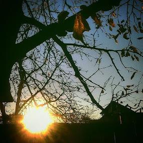 Autumn sunset by Nat Bolfan-Stosic - Landscapes Sunsets & Sunrises ( village, tree, autumn, sunset, leaves )
