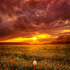 A Thousand Years From Yesterday by Phil Koch - Landscapes Sunsets & Sunrises ( vertical, wisconsin, ray, yellow, travel, landscape, spring, photography, sun, life, sky, nature, emotions, weather, horizons, light, inspired, office, clouds, orange, park, heaven, colors, art, twilight, mood, horizon, journey, scenic, morning, living, portrait, country, field, environment, dawn, season, blue, serene, amber, sunset, horiz  ons, outdoors, meadow, beam, lines, earth, sunrise, natural, inspirational )
