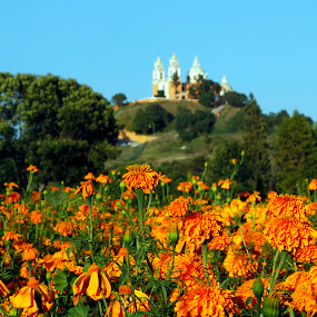 Flowers field and church by Cristobal Garciaferro Rubio - Nature Up Close Gardens & Produce ( cholula, blue sky, field flowers, sky, church, cempazuchitl, flowers, flower )