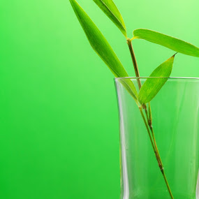 bamboo liqueur detail by Donatella Tandelli - Food & Drink Alcohol & Drinks ( grappa, bamboo, reflection, detail, oriental, green, minimal, delicious, restaurant, taste, chinese, liquid, beverage, herb, alcohol, drink, glass, branch, liqueur, ingredient, bar, transparent, gourmet )