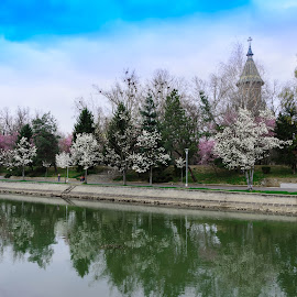 Spring by Zita T. Photography - City,  Street & Park  City Parks ( spring flowers, bega springintimisoara, timisoara, spring, magnolia )